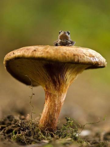 grenouille tiny